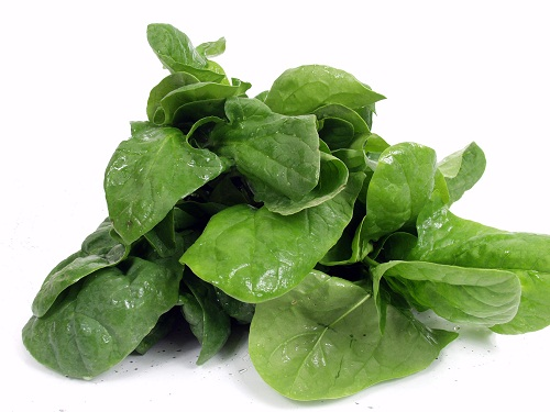 fresh green spinach isolated on white background with water drops