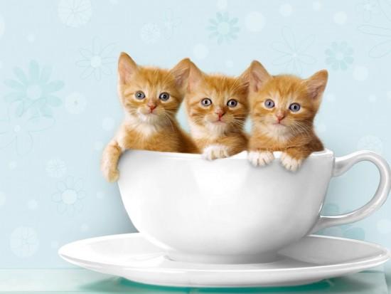 gatos-www-10pixeles-com-23
