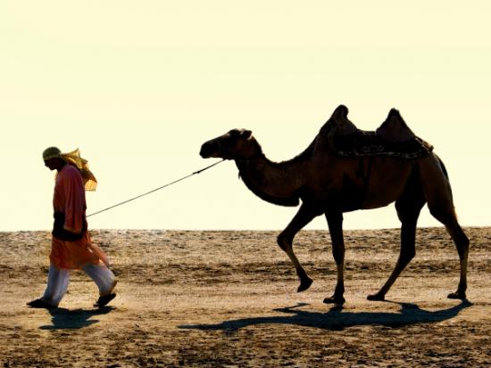 camello-hombre