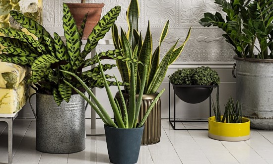 Homes: houseplants