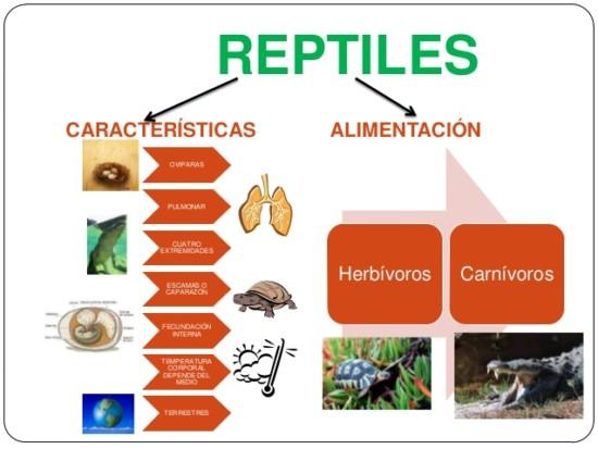 clasificacin-de-los-reptiles-y-anfibios-2-638