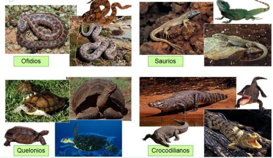 clasificacion reptiles