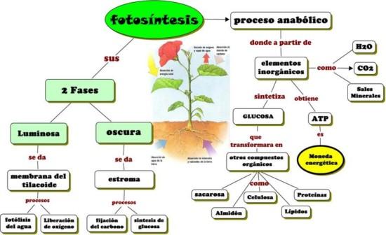 Informaci 243 N Sobre La Fotos 237 Ntesis Y Sus Fases Cuadros Sin 243 Pticos E Im 225 Genes Informacionde Info