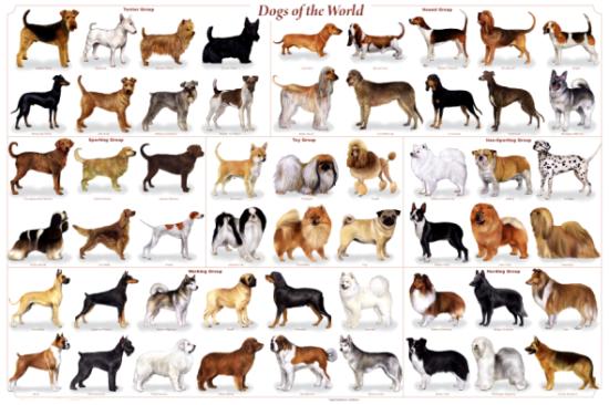razas-de-perros-fci