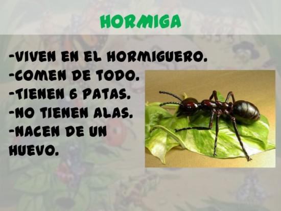 los-insectos-para-infantil-14-728