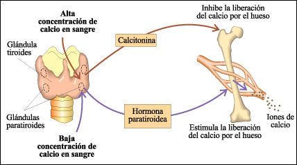 hipercalcemia_