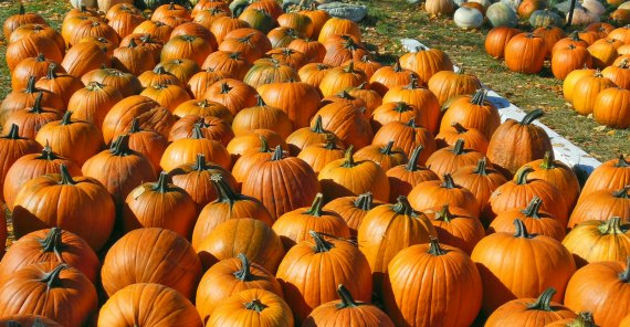 calabazas-halloween