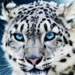 Información sobre los animales en peligro de extinción y extintos