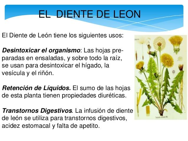 Plantas medicinales m s efectivas con sus usos y for Planta decorativa con propiedades medicinales