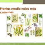 Plantas medicinales más efectivas con sus usos y beneficios