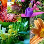 Flores: las más exoticas, raras e interesantes