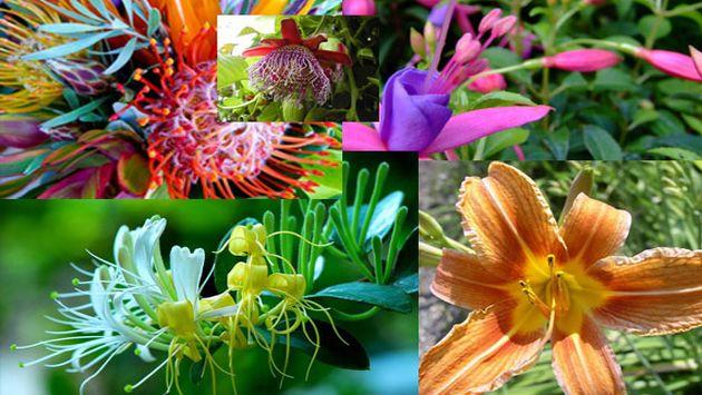 Flores las m s exoticas raras e interesantes for Vivero plantas exoticas