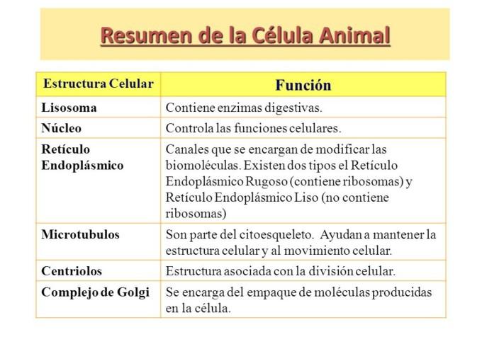 Célula Animal Caracteristicas Partes Funciones
