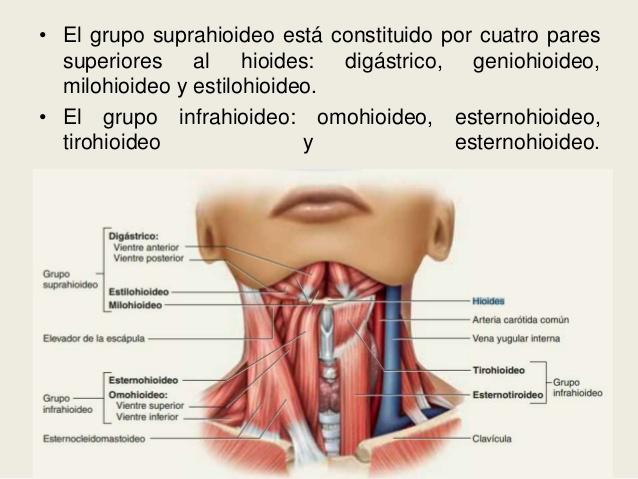 Sistema Oseo Humano - Partes, Nombres, Funciones + imágenes ...